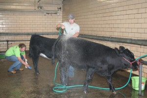 Pam & Mike Haley caring for cattle