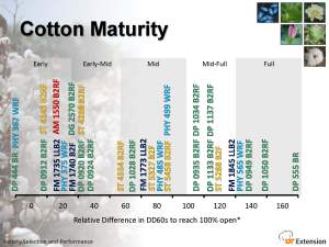 cotton-maturity-2011