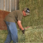 moving hay in the feed barn