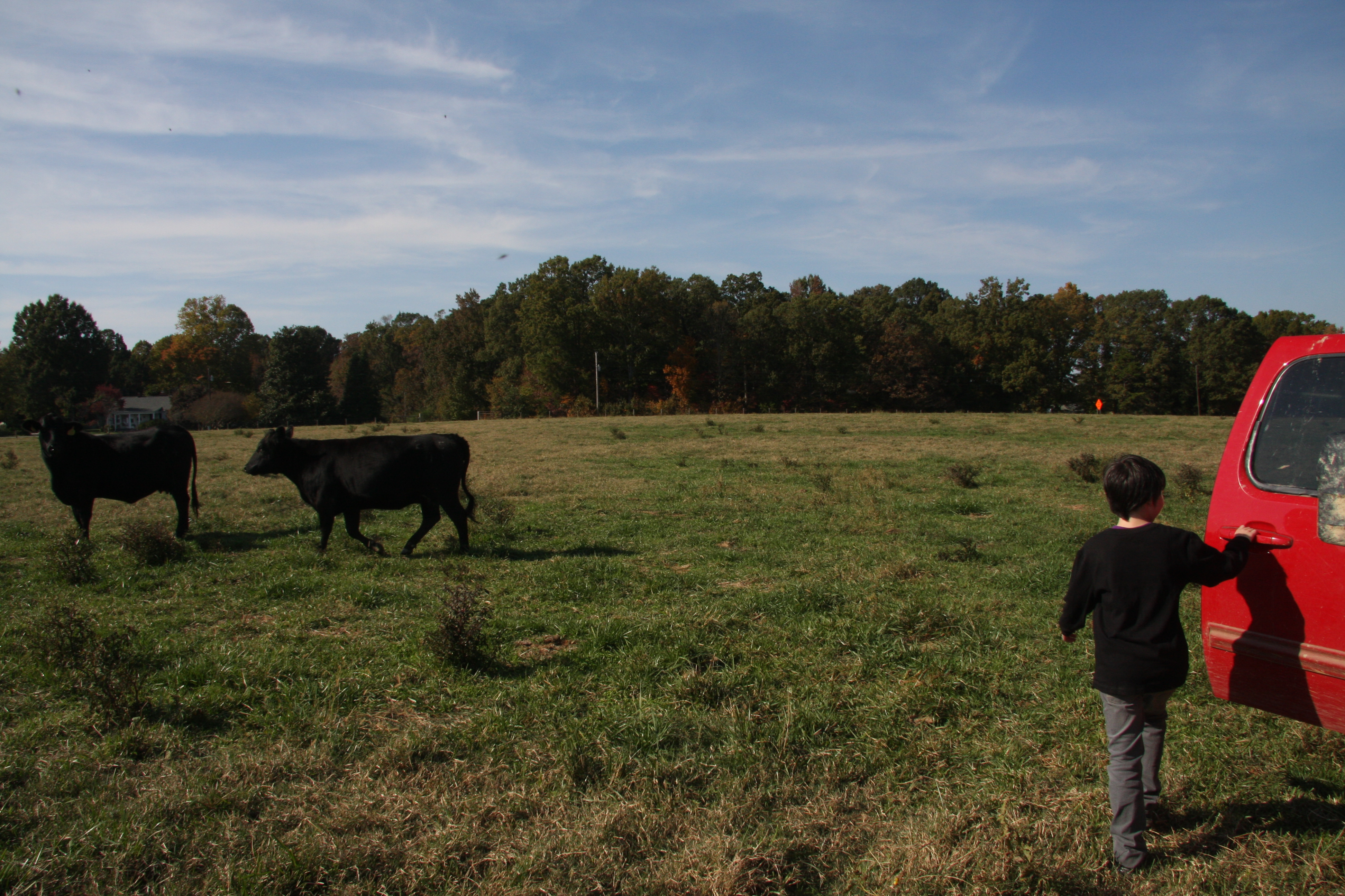 the size of cows up close was surprising to Jake