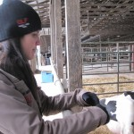 Annie monitoring a cow ready to deliver
