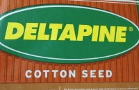 Deltapine Cottonseed