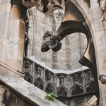 a tiny plant on the stone exterior of Milan's cathedral