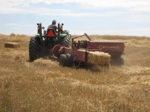 baling wheat straw