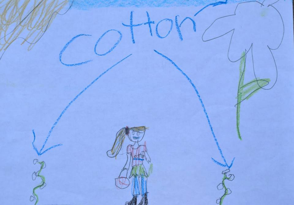 Cotton Plant Drawing For Kids