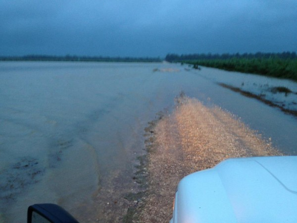 12.5 inches Still raining Water took over the main road on the back of the farm. With widespread rainfall like this the bayous and canals are full to the top there is no telling when this water will recede Brandon Gravois Louisiana