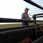 Mark's dad Fred helped keep cows moving