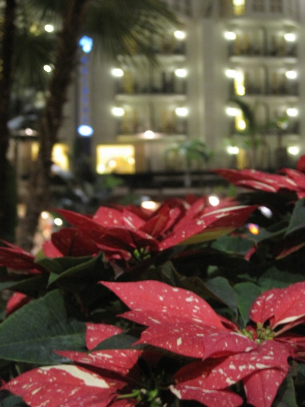 poinsettias at The Gaylord Opryland