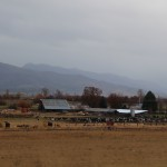 ranch in the Scott Valley
