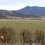 CA cattle ranch
