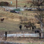 horses on the ranch