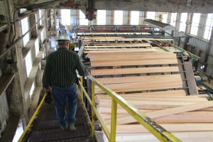 sorted lumber headed to palletts