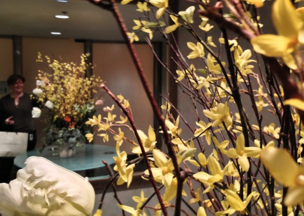 forsythia plants