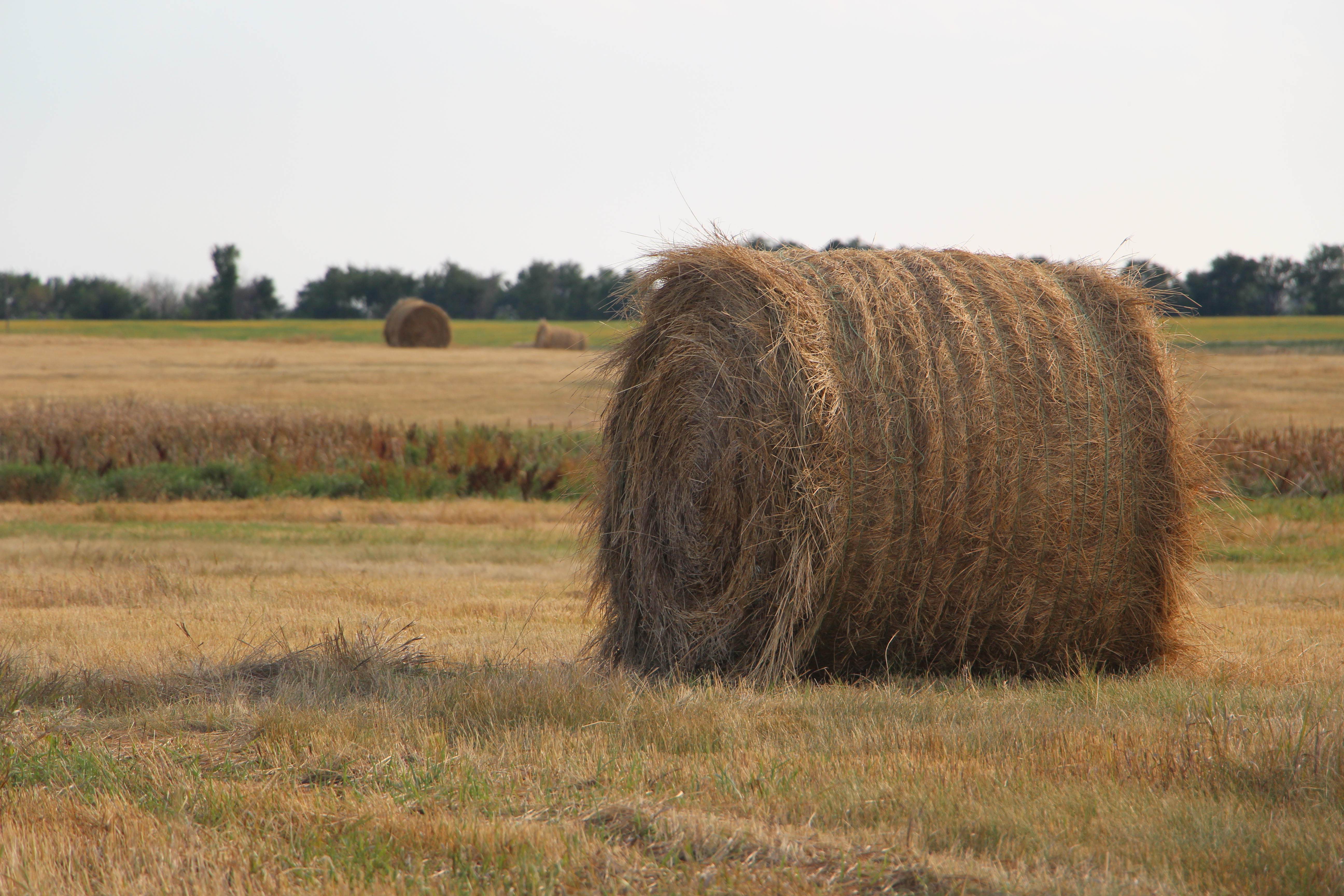 farming hay We have a 16 horse farm in tennessee and use about 80 tons of hay per year the rest, about 60-70 tons we sell to neighboring farms to help reduce our cost of production remember, you should reseed when necessary, fertilize every year, spray for weeds and then cut, ted, rake and roll the hay.