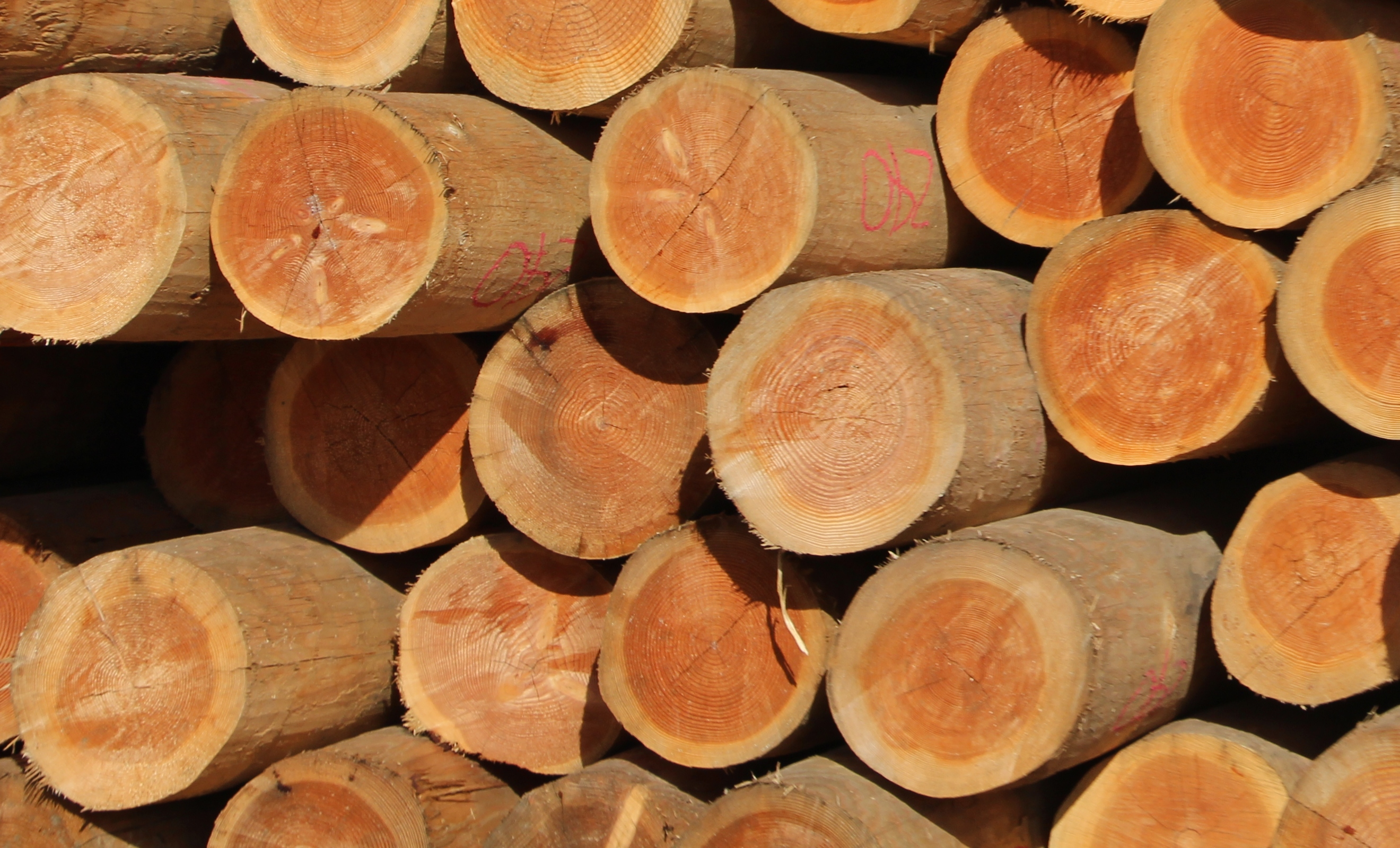 tree growth rings are evidence of plant vascular systems