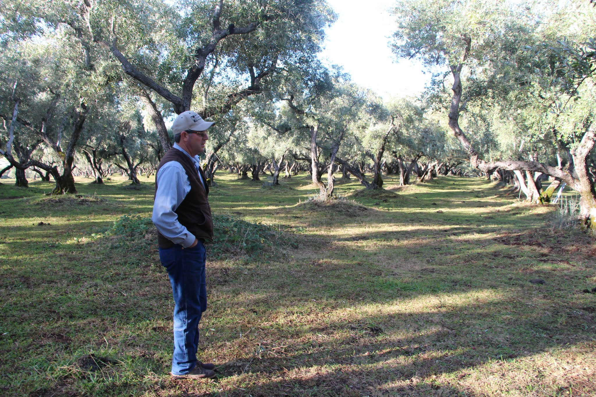 California olive farmer Irv Leen