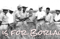 Norman Borlaug photo