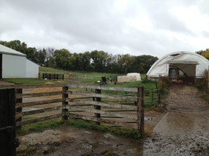 rainy day on the dairy farm