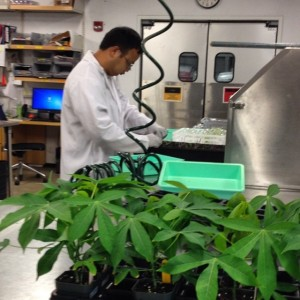 phenotyping at the Danforth Plant Science Center