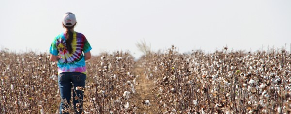 looking for the cotton harvest crew (2)