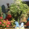 container garden on the deck