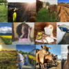 farm instagrams
